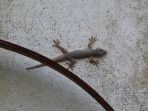 ШпиЕн (сидел на потолке во время ужина)